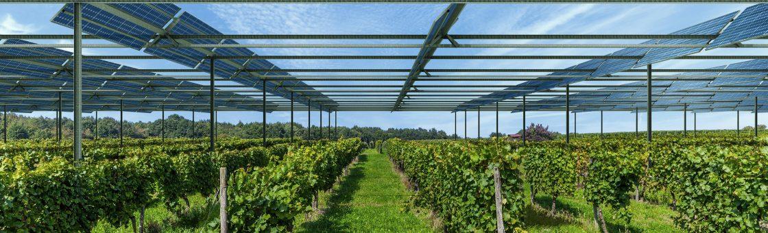 Agrivolatïsme agrivoltaism tracker agriculture